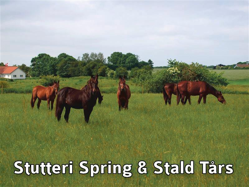 11-banner_spring_taars