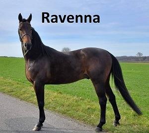 17-banner_ravenna